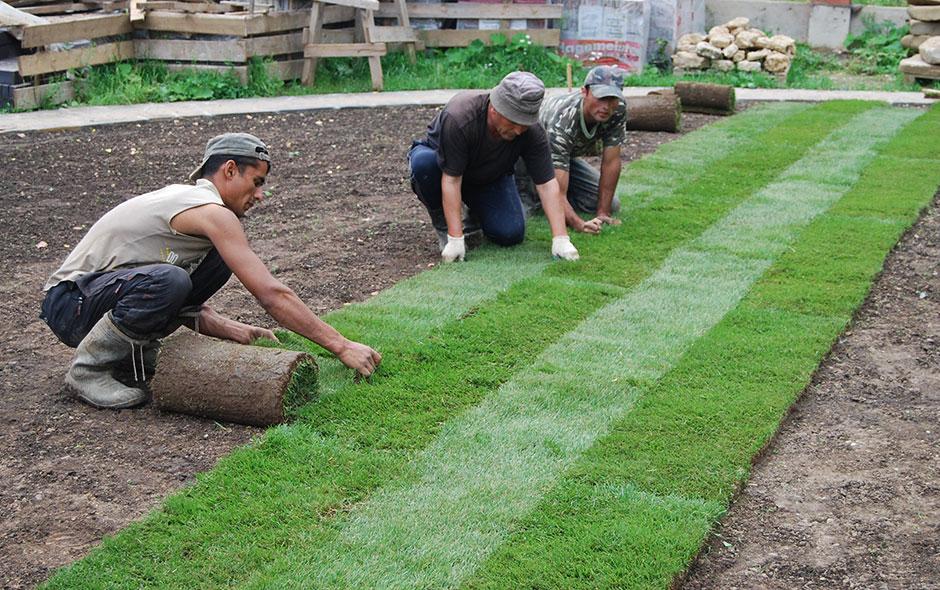 Технология выращивания рулонный газон 12