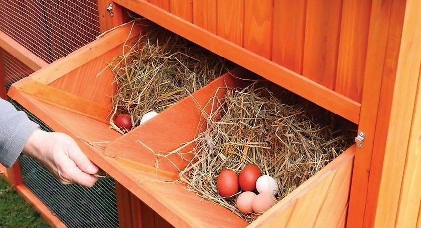 Гнездо для кур фото оригинальные идеи