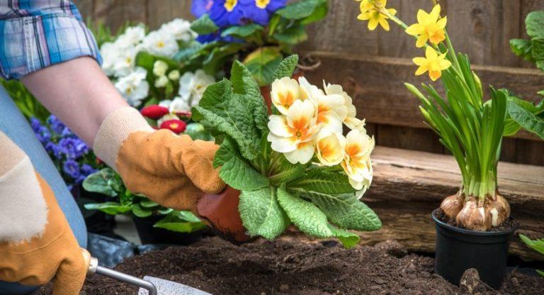 Как правильно сажать или садить цветы 89