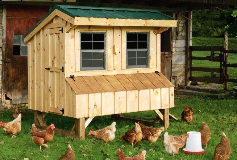 Как построить курятник на 10 кур