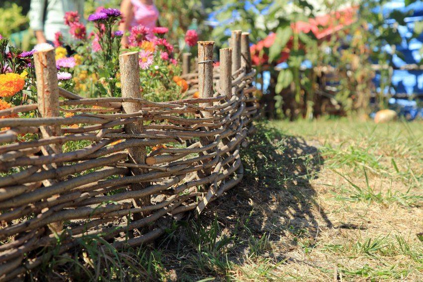 Забор из сухостоя