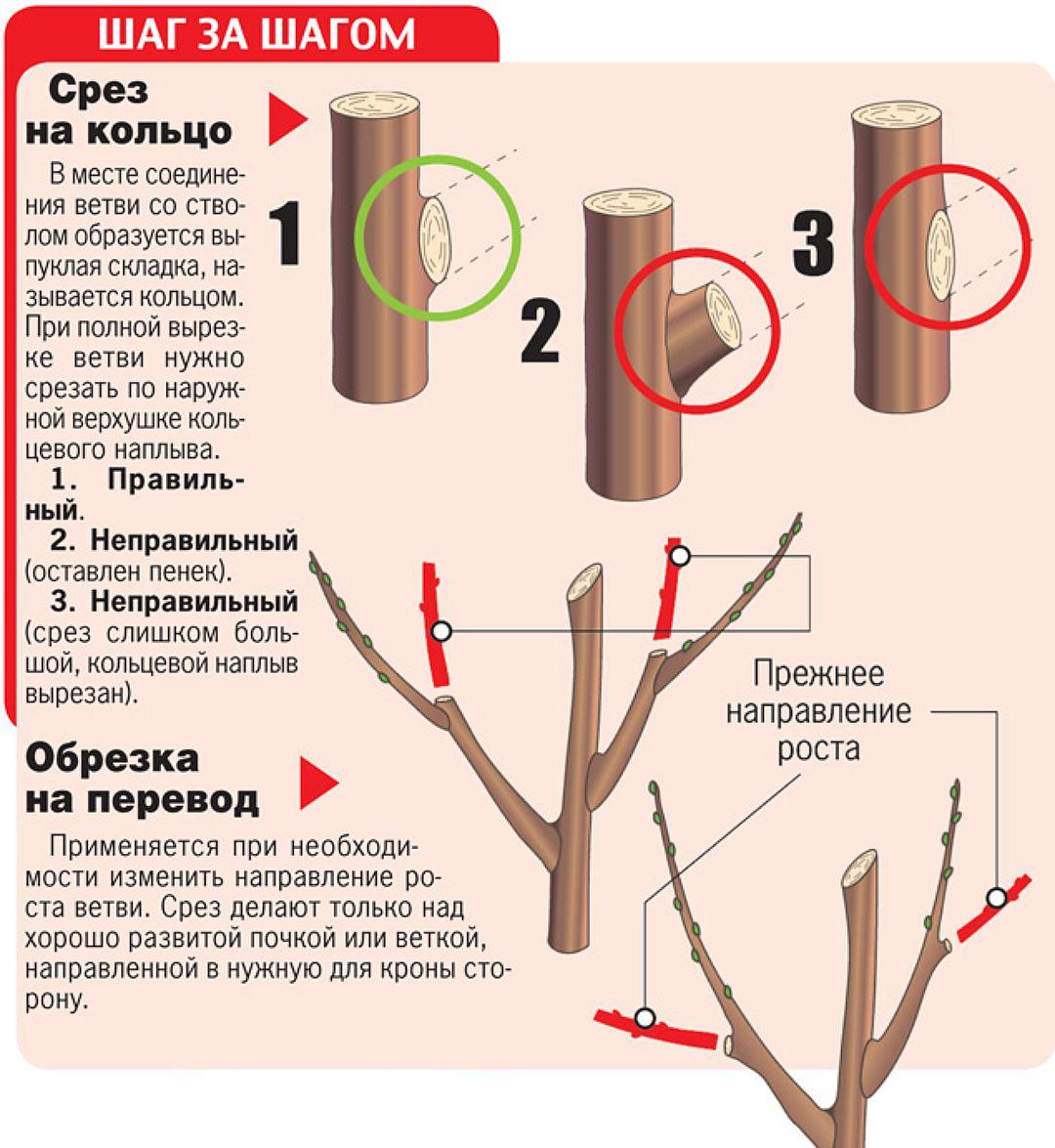 Как сделать из дерево обрезка 132