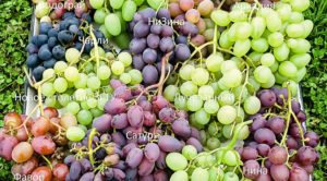 vinograd-v-teplitse-vybiraem-sorta-vinograda-dlya-teplitse-765433