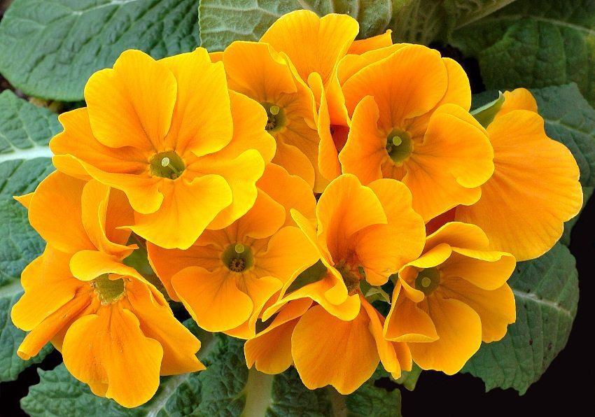 mnogoletnie-tsvety-dlya-dachi-foto-s-opisaniem-rastenij-98765432123456789-0987654323456