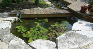 Искусственный водоем на даче: фото, видео, как сделать декоративный пруд