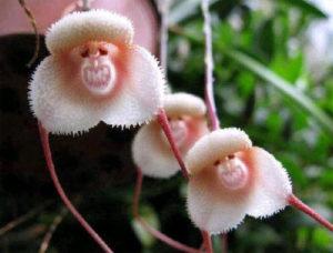 orhideya-kak-uhazhivat-za-orhideej-foto-video-razmnozhenie-i-peresadka-orhidej-4323we43