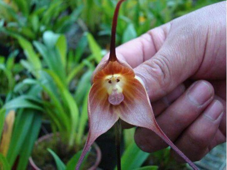 orhideya-kak-uhazhivat-za-orhideej-foto-video-razmnozhenie-i-peresadka-orhidej-0-85