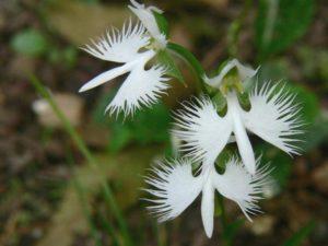 orhideya-kak-uhazhivat-za-orhideej-foto-video-razmnozhenie-i-peresadka-orhidej-43er432