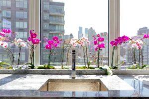 orhideya-kak-uhazhivat-za-orhideej-foto-video-razmnozhenie-i-peresadka-orhidej-9998844d