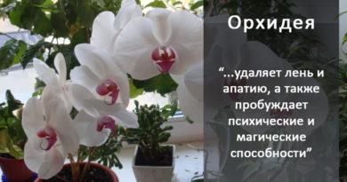 orhideya-kak-uhazhivat-za-orhideej-foto-video-razmnozhenie-i-peresadka-orhidej-432-89