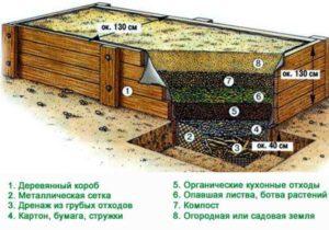vyrashhivanie-ogurtsov-tehnologiya-vyrashhivaniya-ogurtsov-2