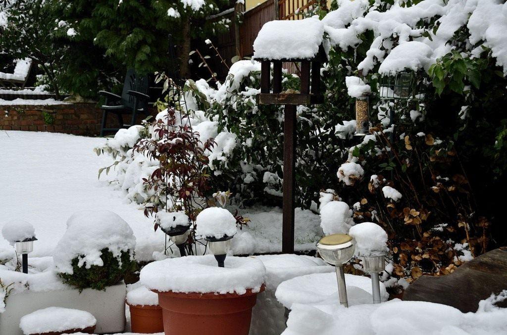 kalendar-tsvetovoda-na-dekabr-2