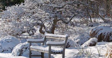 kalendar-tsvetovoda-na-yanvar
