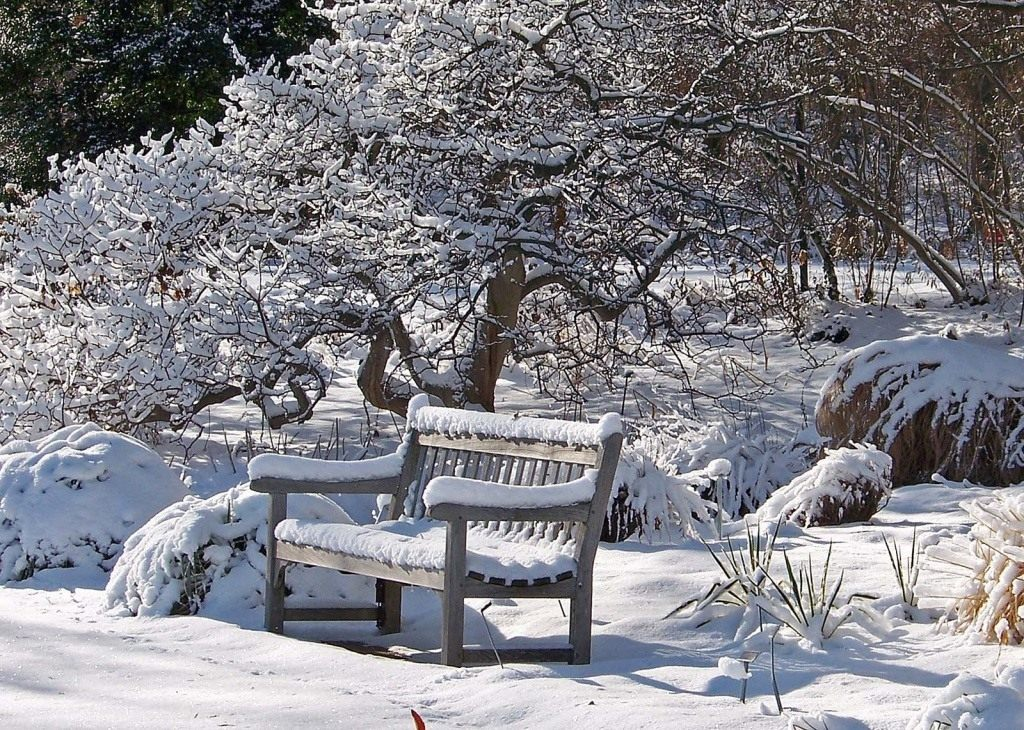 kalendar-tsvetovoda-na-yanvar-2