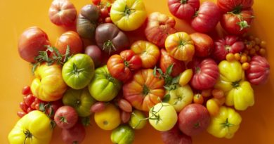 luchshie-novye-sorta-pomidor-tomaty-dlya-teplitsy-i-otkrytogo-grunta