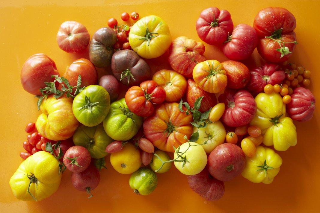 luchshie-novye-sorta-pomidor-tomaty-dlya-teplitsy-i-otkrytogo-grunta-1