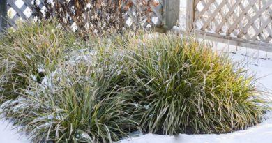 tsvetnik-zimoj-foto-rasteniya-dlya-zimnego-tsvetnika