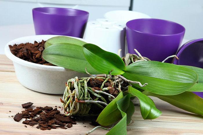 grunt-dlya-orhidej-prigotovlenie-svoimi-rukami-3