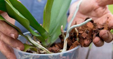 grunt-dlya-orhidej-prigotovlenie-svoimi-rukami