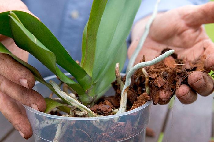 grunt-dlya-orhidej-prigotovlenie-svoimi-rukami-1