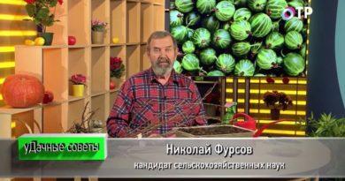 podzimnie-posadki-i-razmnozhenie-plodovo-yagodnyh-kultur