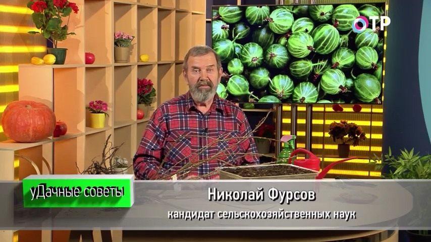 podzimnie-posadki-i-razmnozhenie-plodovo-yagodnyh-kultur-1