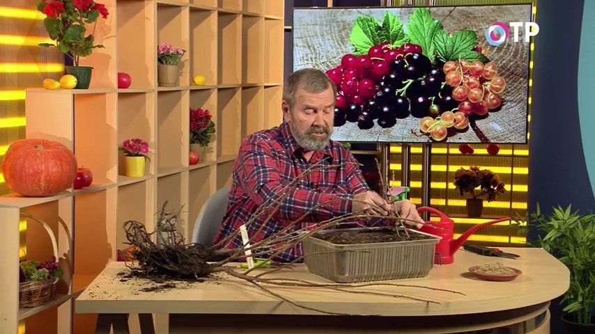 podzimnie-posadki-i-razmnozhenie-plodovo-yagodnyh-kultur-11
