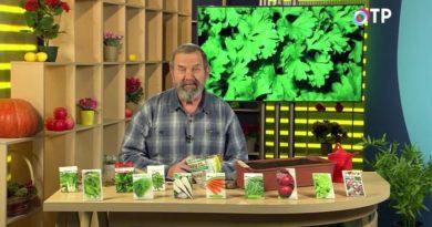 podzimnie-posevy-semyan-ovoshhej-i-zelennyh-kultur