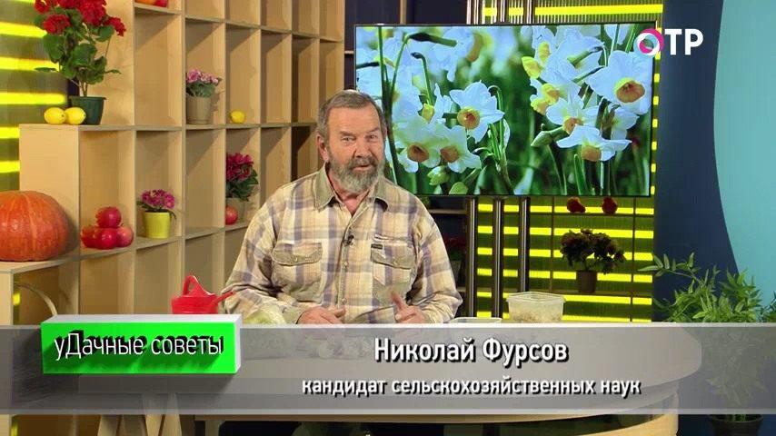 zimnee-razmnozhenie-lukovichnyh-rannetsvetushhih-rastenij-1
