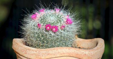razmnozhenie-kaktusov-cherenkami-osobennosti-vybora-i-podgotovki-cherenkov