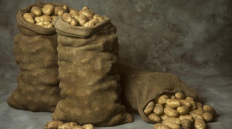 kak-hranit-kartofel-v-pogrebe-v-yashhikah-ili-rossypyu