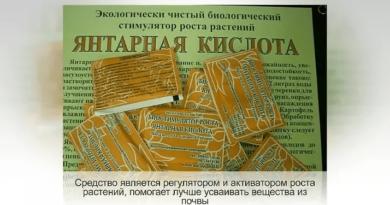 yantarnaya-kislota-dlya-rastenij-kak-prigotovit-rastvor-dlya-pochvy