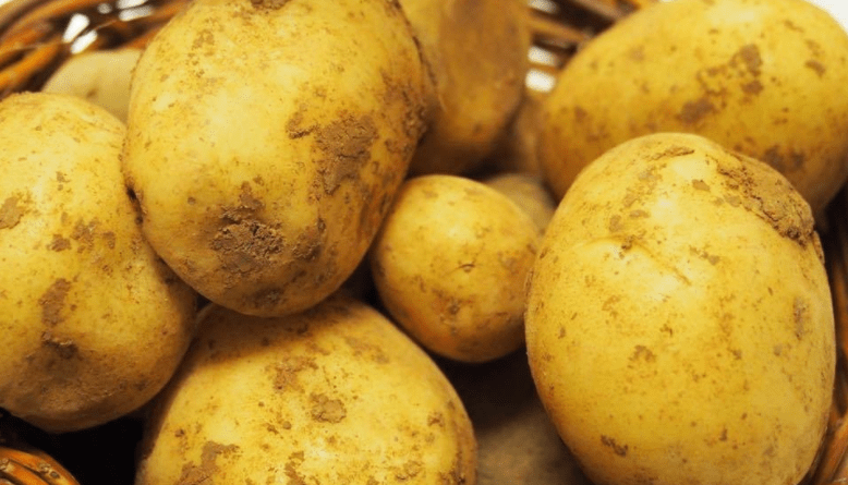 kartofel-timo-hankkiyan-foto-otzyvy-opisanie-sorta