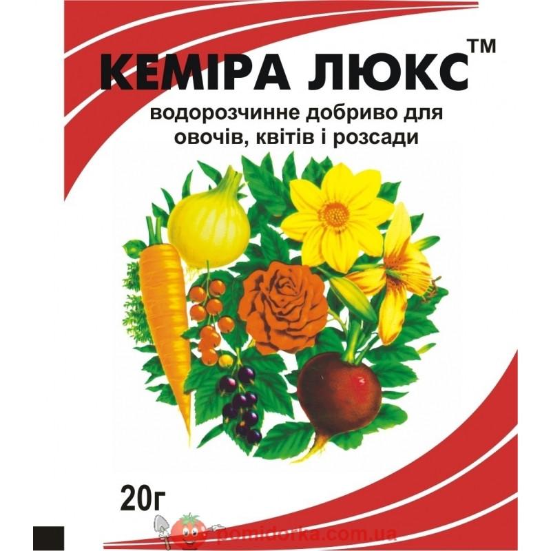sort-baklazhanov-zhizel-opisanie-sorta-foto-otzyvy-osobennosti-vyrashhivaniya-7