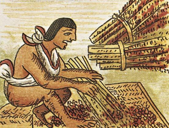 kultivirovanie-amaranta-v-chili-i-ego-primenenie-v-organizatsii-pitaniya-shkolnikov-1