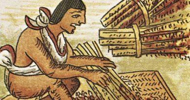kultivirovanie-amaranta-v-chili-i-ego-primenenie-v-organizatsii-pitaniya-shkolnikov