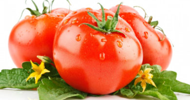 pomidor-eto-ovoshh-ili-frukt
