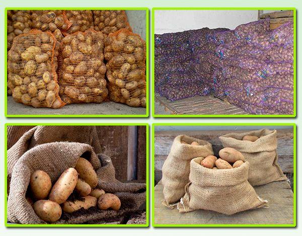 kak-hranit-kartofel-v-pogrebe-v-yashhikah-ili-rossypyu-8