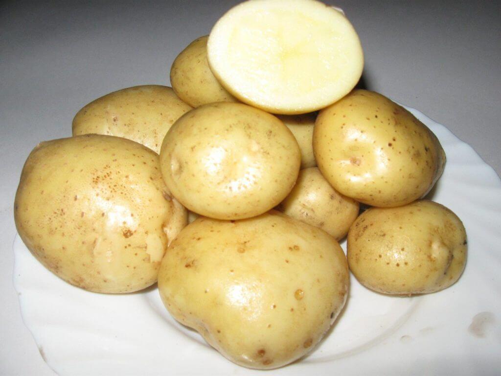 kartofel-timo-hankkiyan-foto-otzyvy-opisanie-sorta-1