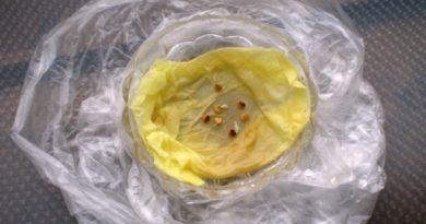 zamachivanie-semyan-polietilenovyh-paketikah