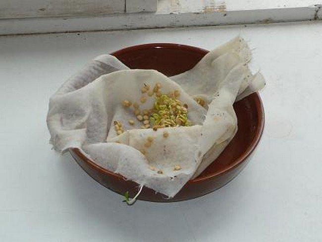 zamachivanie-semyan-v-vodke-zachem-nuzhno-zamachivat-semena-pomidor-5