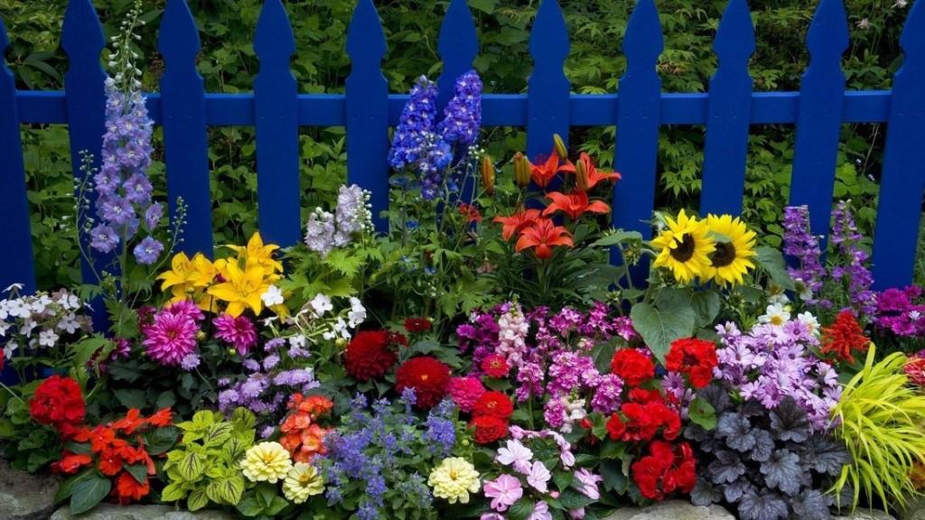 Какие цветы посадить на даче, чтобы цвели все лето? Фото