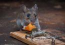 Борьба с мышами: средства защиты от мышей в доме и на даче