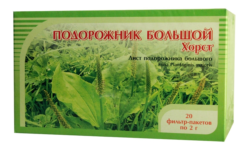 podorozhnik-bolshoj-foto-lechebnye-svojstva-sbor-i-lechenie-2