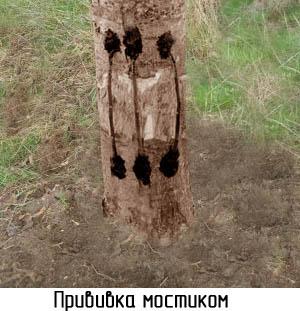obrezka-derevev-postradavshih-ot-morozov-2