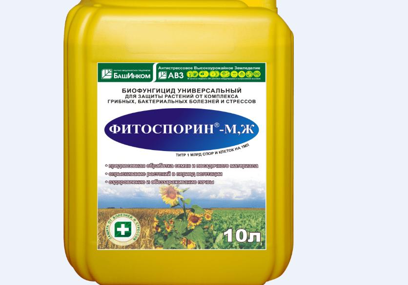 bolezni-i-vrediteli-ogurtsov-v-teplitse-i-otkrytom-grunte-prichiny-i-lechenie-20