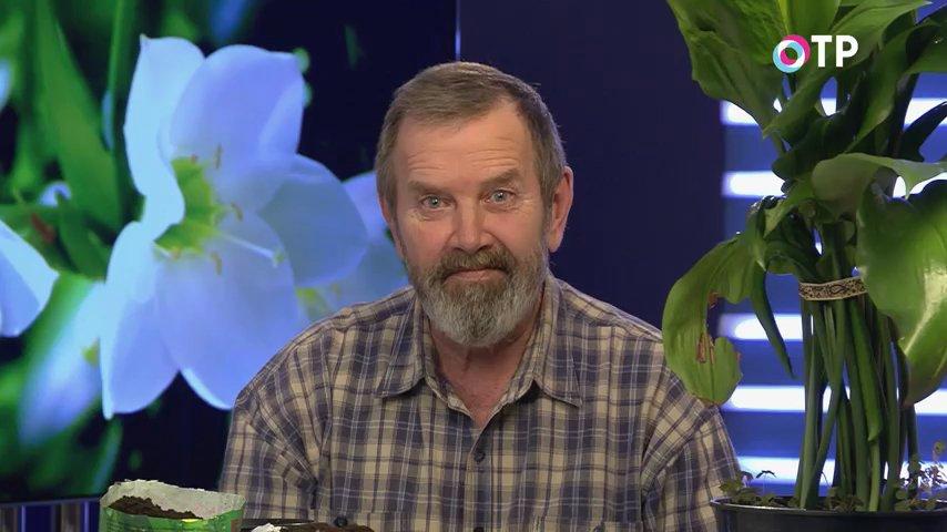 kak-peresadit-euharis-udachnye-sovety-kandidata-selskohozyajstvennyh-nauk-1