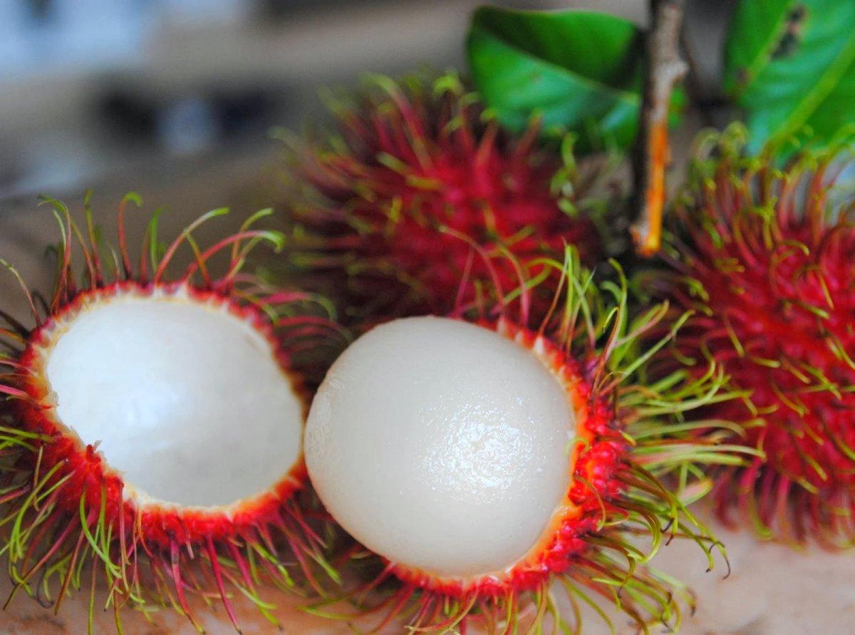 ekzoticheskie-frukty-foto-nazvanie-opisanie-9