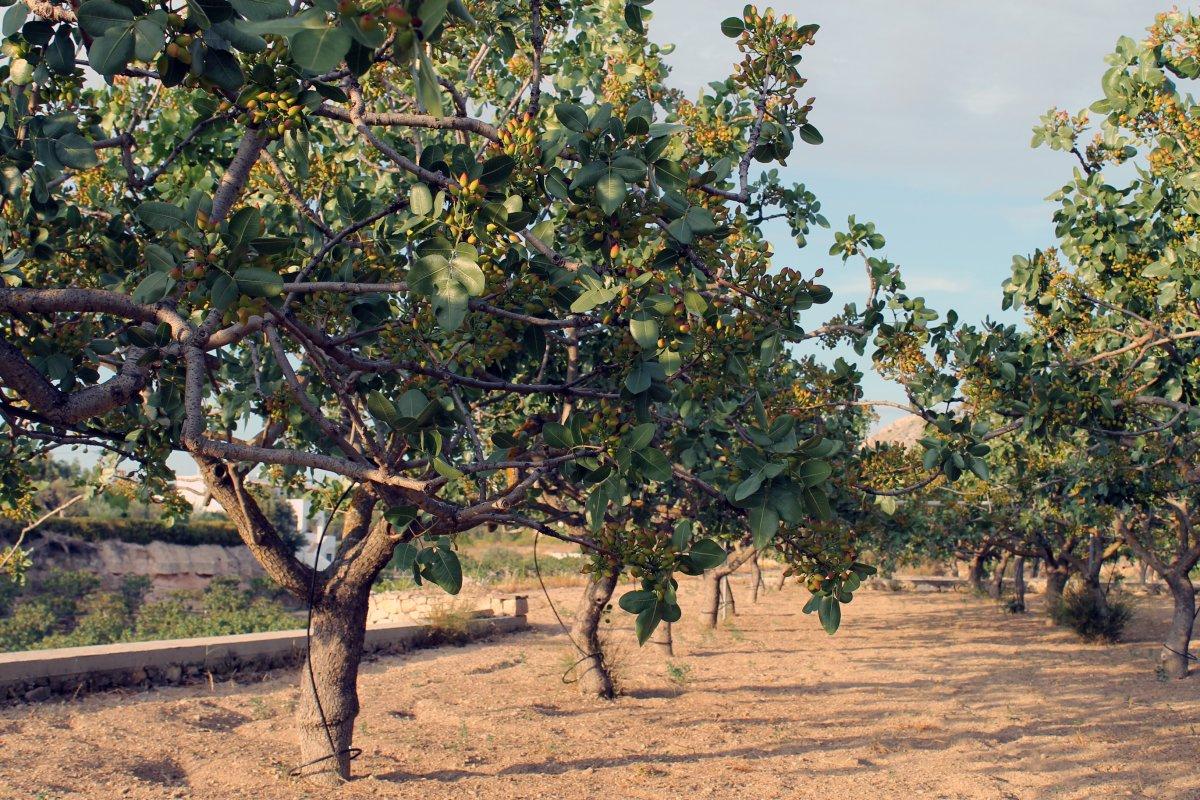 tropicheskie-plody-rastenij-kotorye-my-edim-foto-opisanie-31