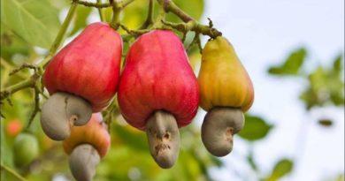 tropicheskie-plody-rastenij-kotorye-my-edim-foto-opisanie